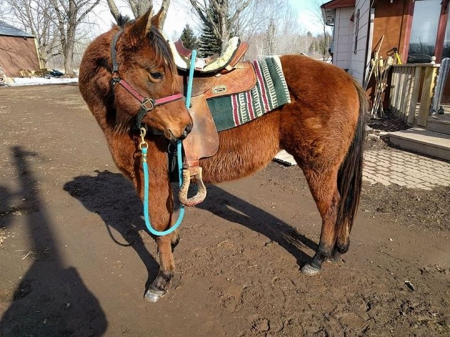 1 Equine Classifieds Horses For Sale Stallions