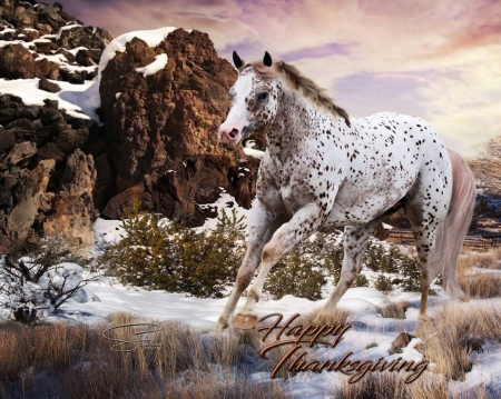 Silver stallion and tammy cam for fans 7