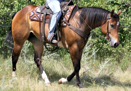 An Awesome Vanzi, Appaloosa Mare for sale in North Dakota