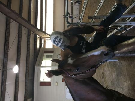 Tidy's Poquito Rey, American Quarter Horse Gelding for sale in Colorado