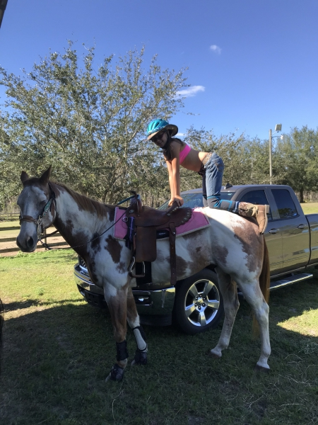 Chief, Pinto Gelding for sale in Florida