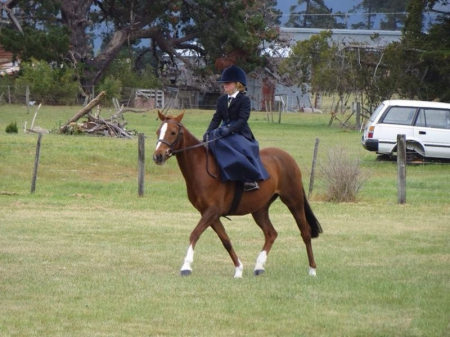 Rozie, Welsh Pony Mare for sale in Arizona