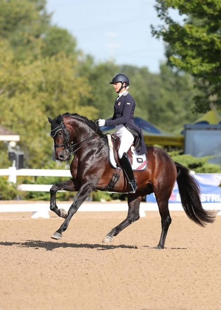 Nyte D, Dutch Warmblood Gelding for sale in Illinois