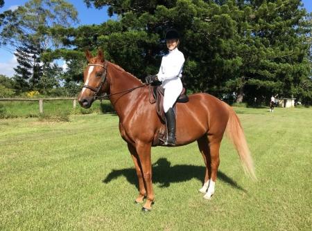 Beautiful Irish Sport Horse, Irish Sport Horse Gelding for sale in Louisiana
