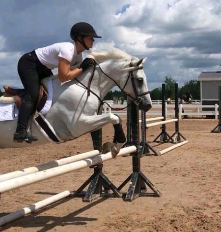 jericho, Quarter Horse Cross Gelding for sale in Idaho