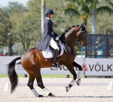 Meet Nyte D. Grand Dressage Warmblood Suitable For Any1, Dutch Warmblood Gelding for sale in Texas