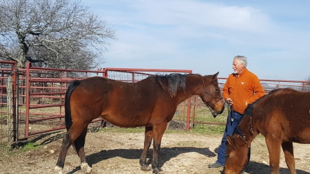 C J DYNAMITE SUGAR, American Quarter Horse Mare for sale in Texas