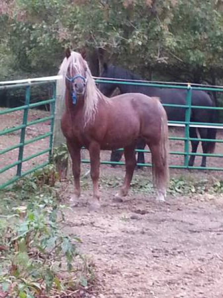 Updated Today: Horses For Sale  All Breeds  All Disciplines