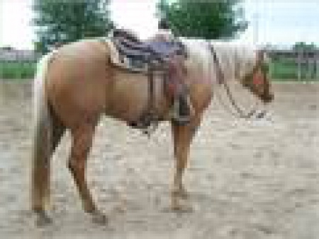Super nice Palomino family friendly horse, Palomino Gelding for sale in California