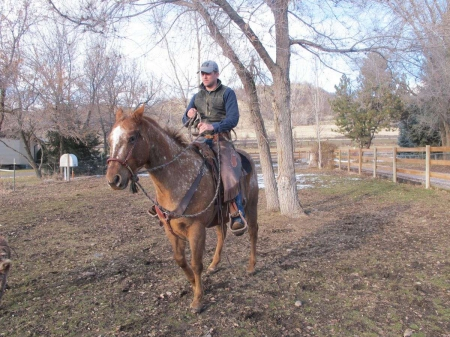 Appaloosa for Sale, Appaloosa Gelding for sale in Texas