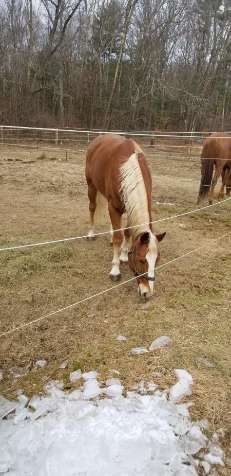 Heeza Reed Hancock, American Quarter Horse Gelding for sale in Massachusetts