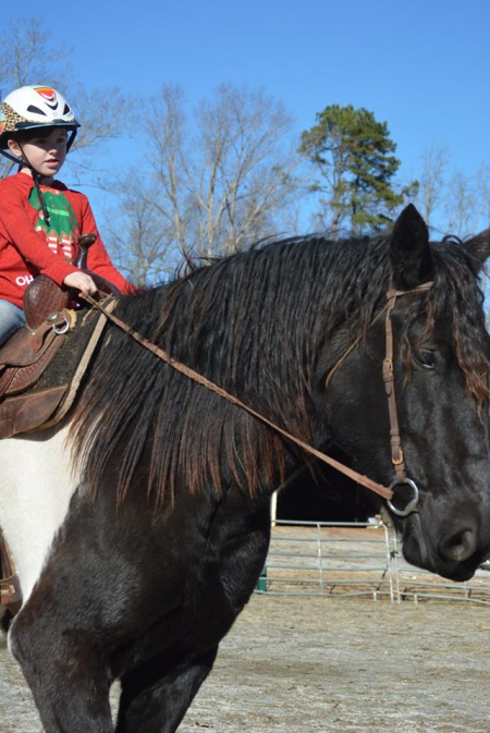 Samson-'13 Gypsy Draft Cross Black Tobiano 16.3 hds Gelding. Extremely kind and gentle. Samson is a gentle giant., Gypsy Vanner Gelding for sale in Ontario