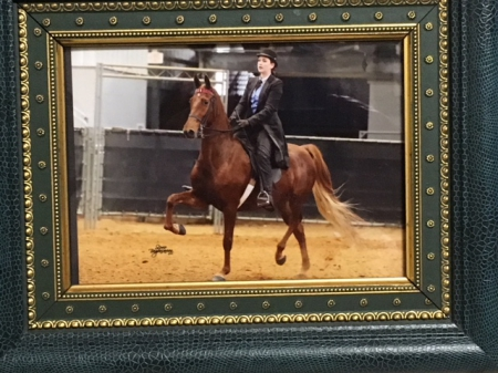 Diva, American Saddlebred Mare for sale in Texas