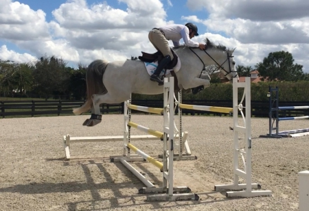 Missi Cassini, Holsteiner Mare for sale in Florida