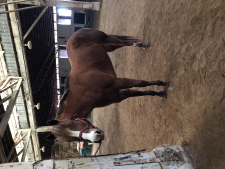 LT My Shady Secret , American Quarter Horse Mare for sale in Oregon