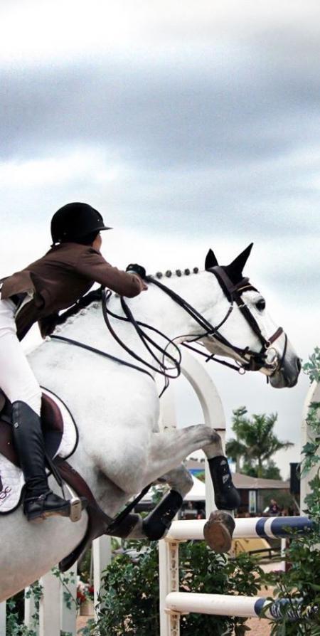 Super Amazing Schoolmaster Jumper Holsteiner Sport Horse!, Holsteiner Gelding for sale in Arizona