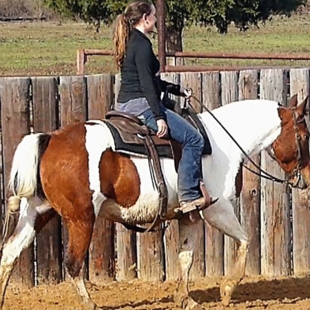 Sadie - 15.2HH, 7 years old, Bay Paint Mare, American Quarter Horse Gelding for sale in Ohio