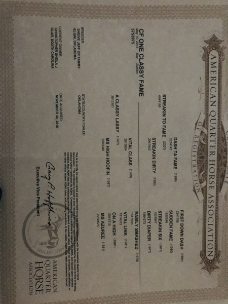 CF One Classy Fame, American Quarter Horse Gelding for sale in South Carolina