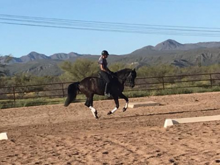 Zalamera, Andalusian Mare for sale in Arizona