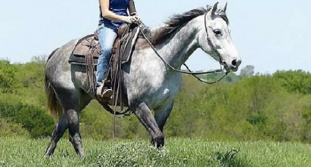 Denned, American Quarter Horse Gelding for sale in Florida