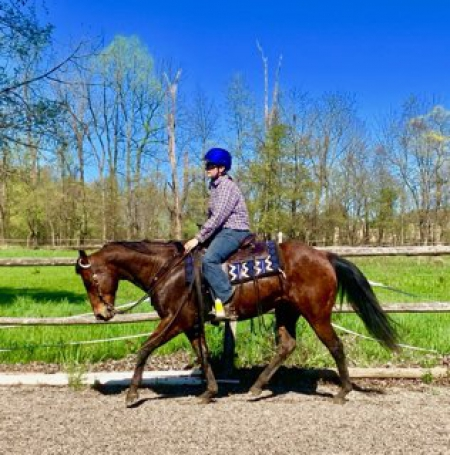 Handsome Trail Horse Deluxe- 12 yr old Bay Quarter Horse Gelding For Sale Jumps, English, & Western!, American Quarter Horse Gelding for sale in Pennsylvania