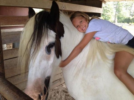 IngKing, Gypsy Vanner Stallion for sale in Kentucky