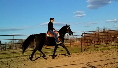 NEEGEE, Arabian Gelding for sale in Minnesota