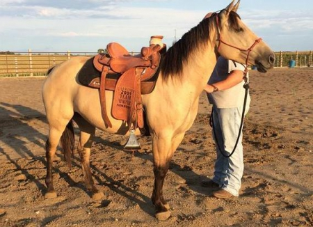 dunny, American Quarter Horse Mare for sale in Texas