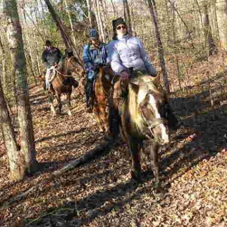 Sego Lily, Rocky Mountain Mare for sale in Tennessee
