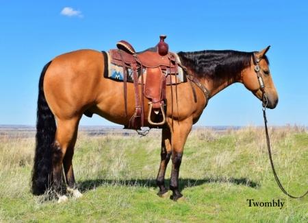 Jumba, American Quarter Horse Gelding for sale in Nebraska
