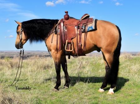 Monster, American Quarter Horse Gelding for sale in Nebraska