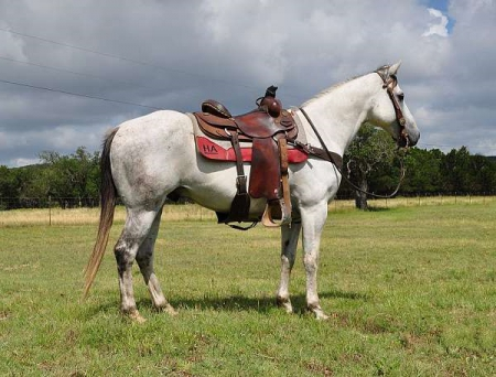 Endenns, American Quarter Horse Gelding for sale in Louisiana