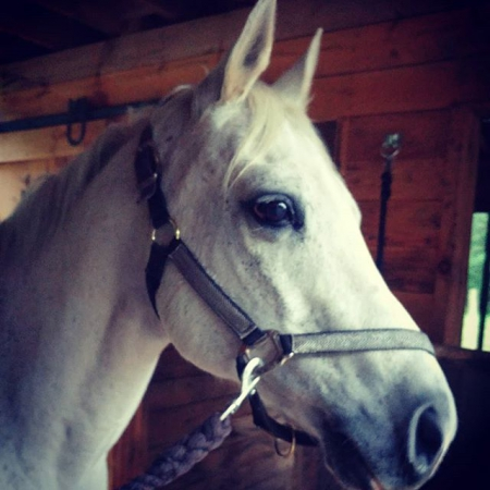 Updated Today: Horses For Sale  All Breeds  All Disciplines  All States