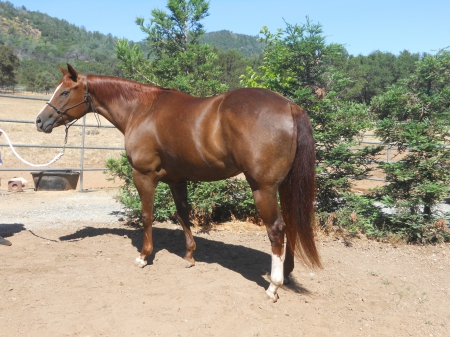Emma I Sweet, American Quarter Horse Filly for sale in California
