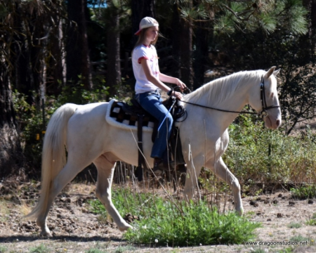 Baptiste Jay Cheyadow, Morgan Gelding for sale in Washington