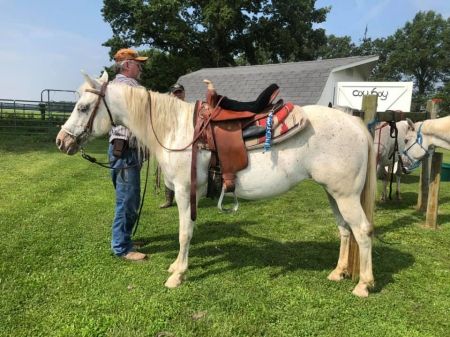 "SCF SIlver On The Sly ""Precious"", POA Mare for sale in Illinois"