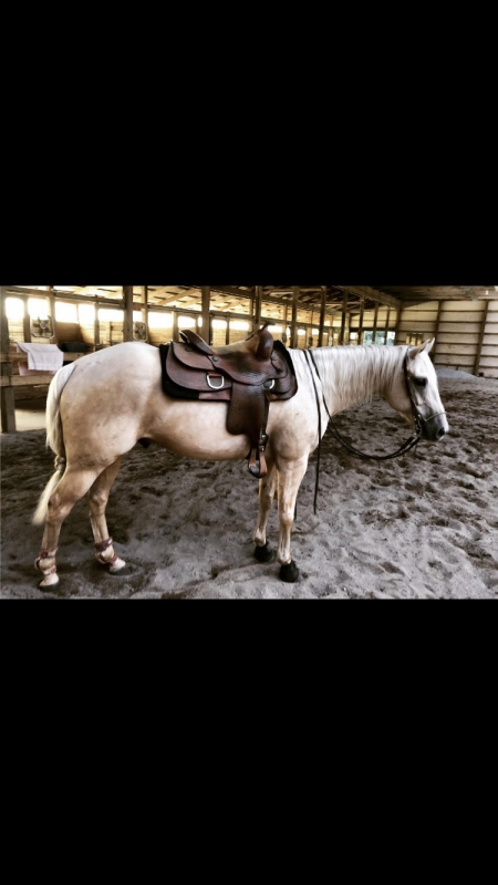 Custom Silver Dollar, Appaloosa Gelding for sale in Michigan