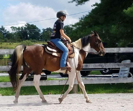 Amusing Paint trail gelding available now, Other Gelding for sale in North Carolina