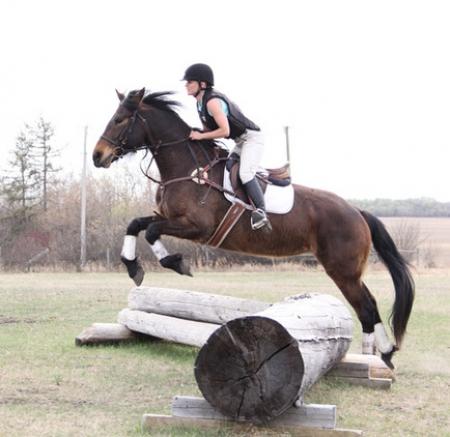 Damita WHF, Quarter Pony Mare for sale in Ohio