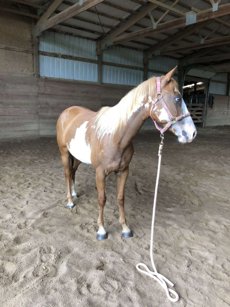 Ellie Mae, Ponies (All) Mare for sale in Wisconsin