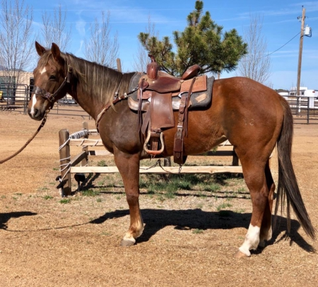 Evie, American Quarter Horse Mare for sale in New Mexico