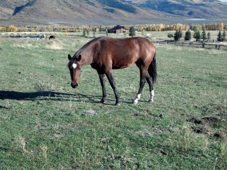 TWIGGY, Azteca Mare for sale in Utah