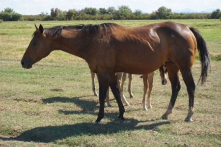 Kids Flame, American Quarter Horse Mare for sale in Arizona
