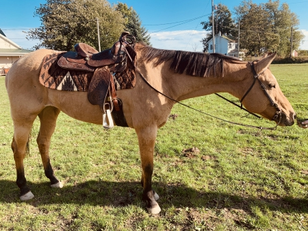 Skip N Tuff Bar, American Quarter Horse Mare for sale in Ohio