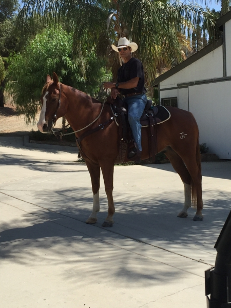 Hes A Right Doc (Dante), American Quarter Horse Gelding for sale in California