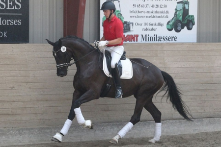 Leatherdale II, Hanoverian Gelding for sale in California