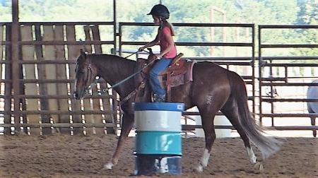 TIMMY, American Quarter Horse Gelding for sale in California