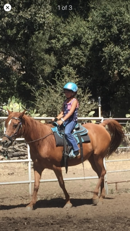 Sunny, Arabian Mare for sale in California
