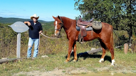 Smooth Gaited Missouri Foxtrotter Trail Gelding (Read Full Description), Missouri Fox Trotting Horse Gelding for sale in Missouri