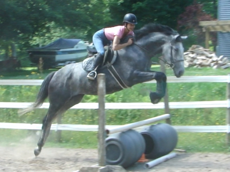 Bianca HH, Trakehner Mare for sale in New York